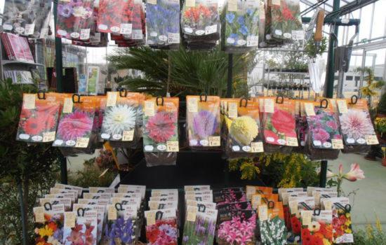 Entretien de jardin eric paysage plouer sur rance for Entretien jardin locataire