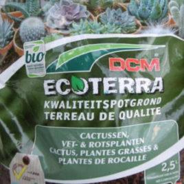 Terreau Cactus