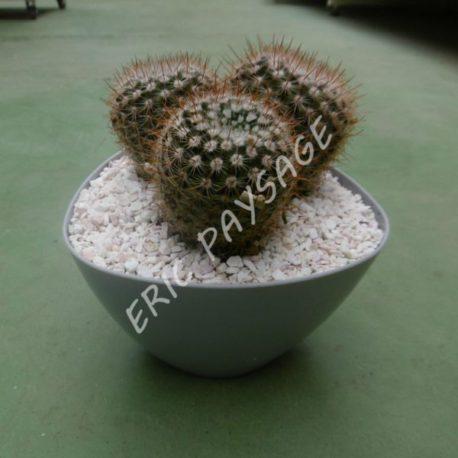Pot plastique gris + 1 cactus 10€ ERIC PAYSAGE 22490 PLOUER SUR RANCE (Copier)